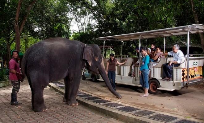 The-Melaka-Zoo