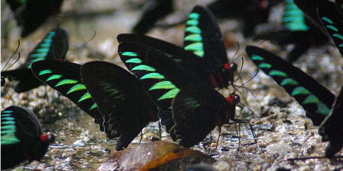 butterfly_park_melaka